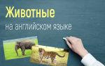 Животные на английском языке (дикие, домашние, рыбы)