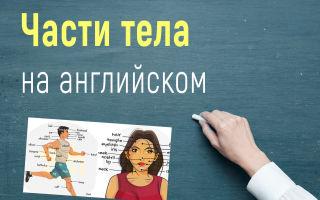 Части тела на английском языке с переводом