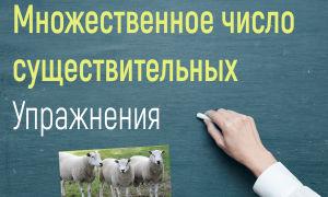 Упражнения на множественное число существительных в английском языке