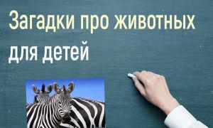 Английские загадки про животных для детей